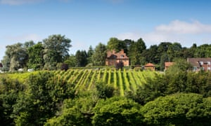 general view of an English vineyard in summer