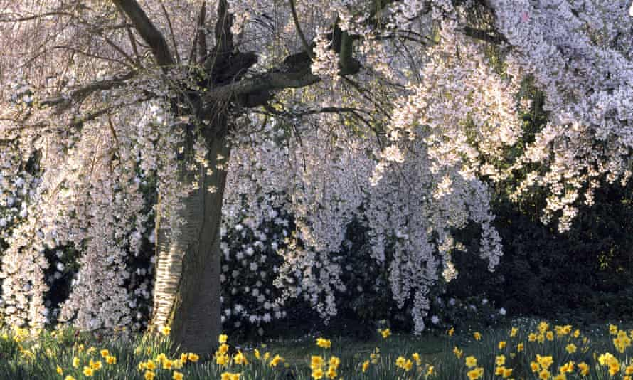 'Unlike autumn, with its garden fires and leaf rot, spring isn't a season that has much of a smell to it.'