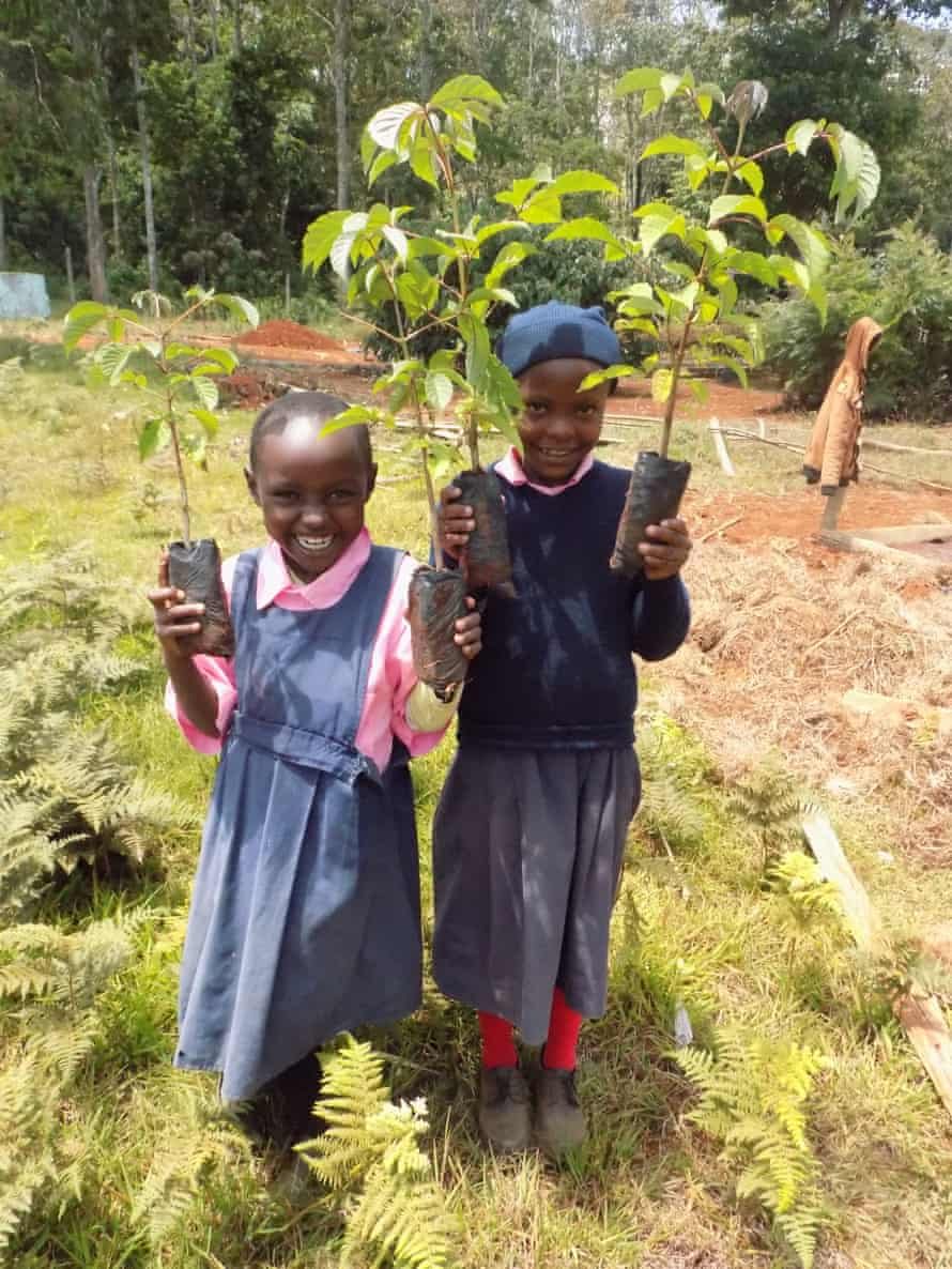 A reforestation project in Kenya by the International Tree Foundation.
