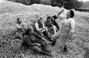 Jindrich Streit: Potato Harvesters 1985