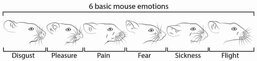 Six different mouse facial expressions