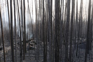 Destroyed woodland in Krasnoyarsk.