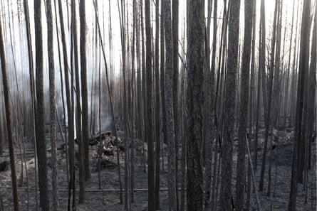 Destroyed woodland in Krasnoyarsk.
