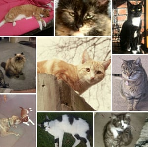 Composite of some of the 50 cats that have been reported missing in the New Zealand town of Timaru in 2016.