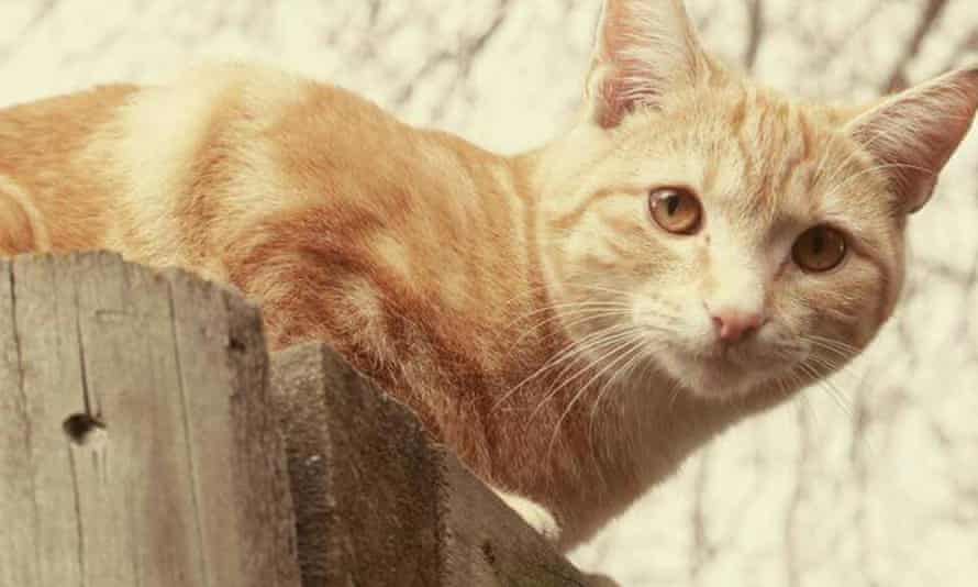 Moses, one of the 50 cats that have been reported missing in the New Zealand town of Timaru in 2016.