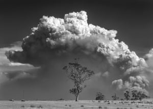 smoke cloud in above a tree
