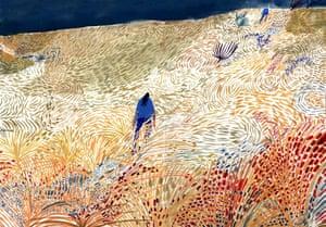 Fields by Charlotte Agar