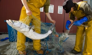 Scientists sort through a fishing net, removing Patagonian toothfish