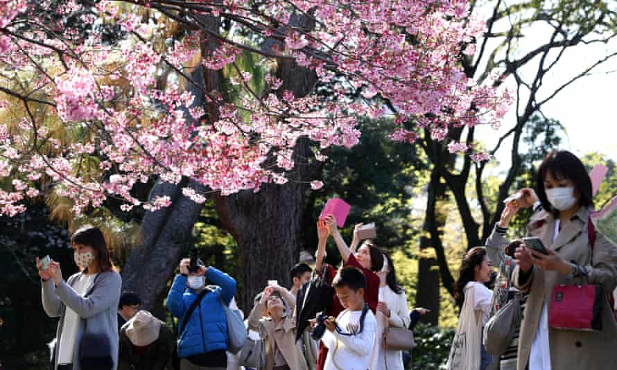 Visitors enjoy the cherry blossom in a Tokyo park in March last year.