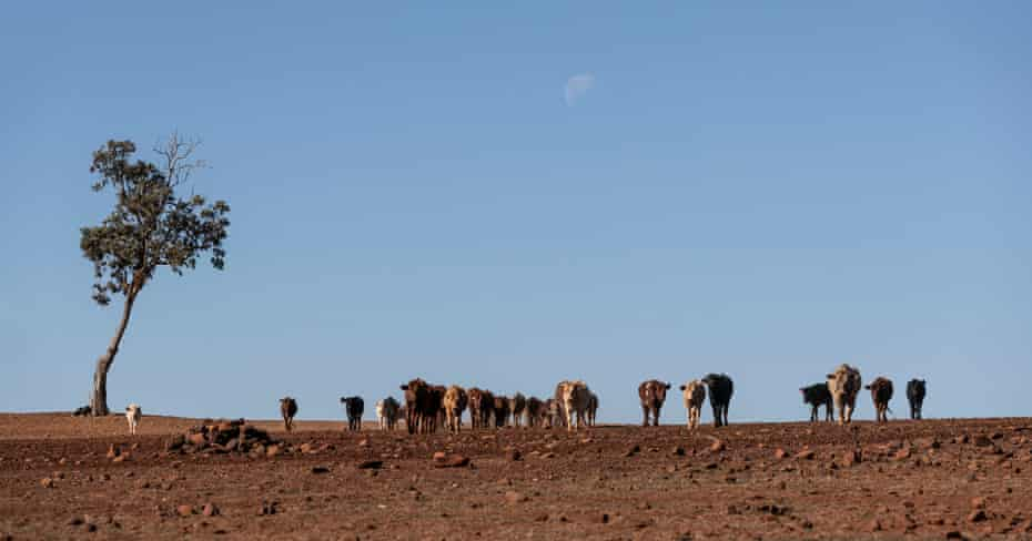 A severely drought affected property north-east of Coonabarabran