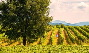 The vineyards of Franciacorta, Brescia province, Lombardy, Italy, Europe