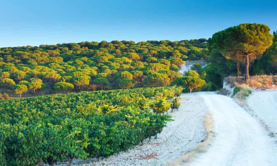 in ribera del Duero wine  area