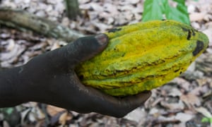 A farmer in Mont Tia national park in the Côte d'Ivoire holds a recently harvested cocoa pod.