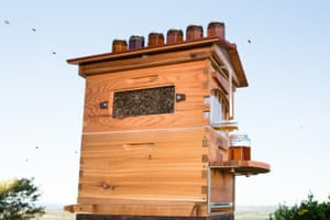 2016 The Flow Hive. Designed by Cedar and Stuart Anderson and the Evolve Group, the Flow Hive is a revolution in bee hive design.