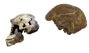 Homo naledi may have lived at the same time as the first modern humans. Left: ''Neo'' skull of Homo naledi. Right: Omo 2 skull, one of the earliest modern humans. Photo credit: Wits University/ John Hawks