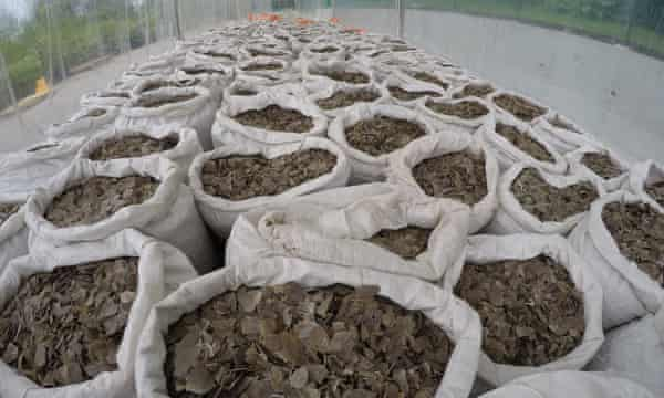 A seizure by the Singaporean authorities of over 12 tonnes of pangolin scales, April 9, 2019