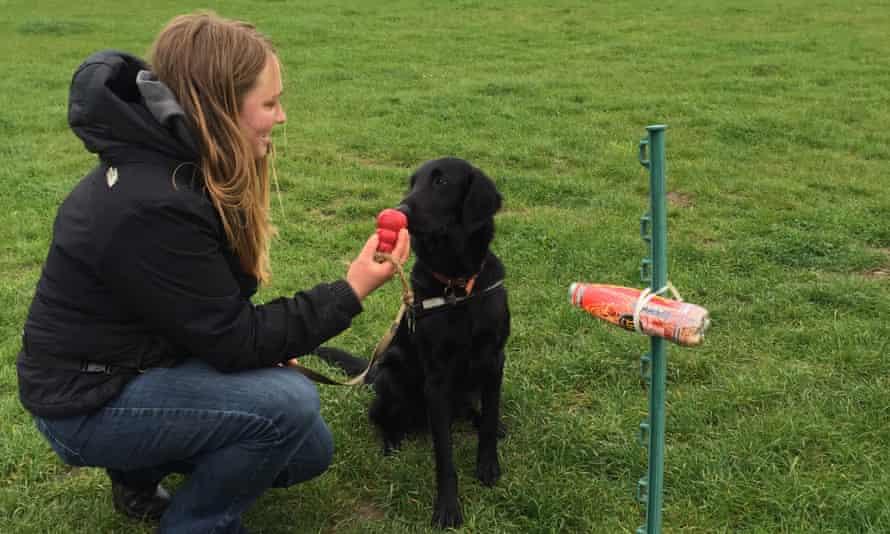 Emily Howard-Williams & Tui the sniffer dog