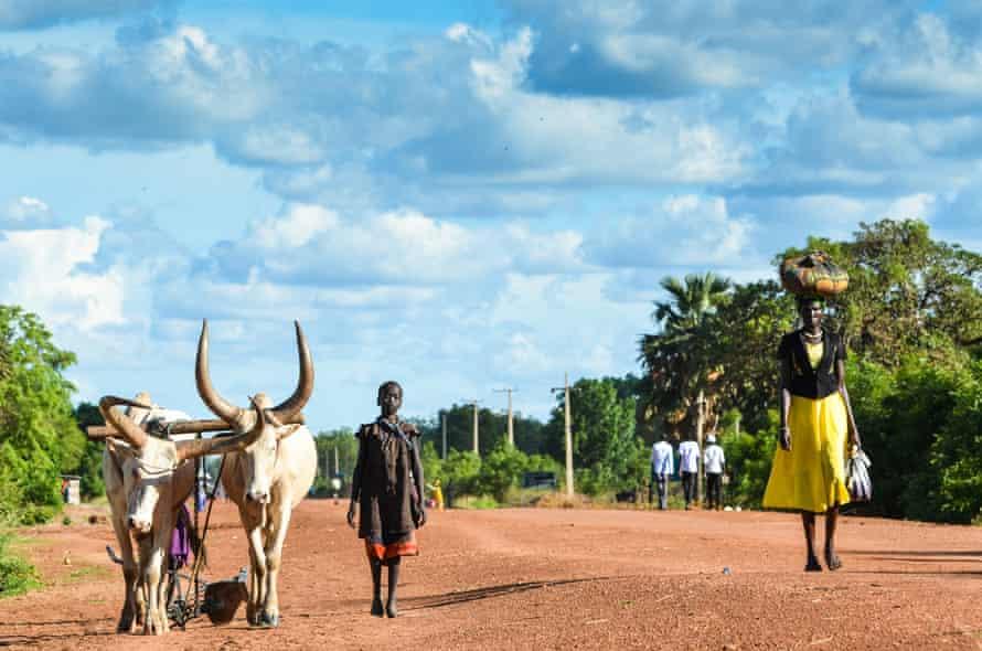 Cattle in Rumbek
