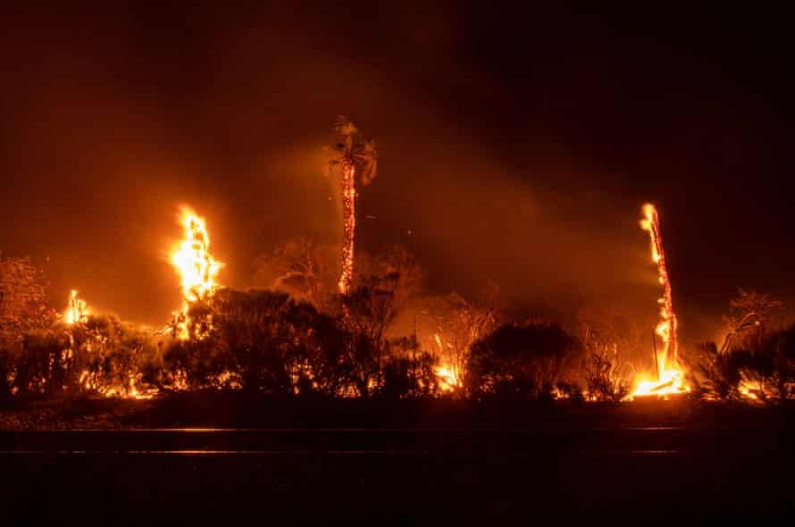 A palm tree burns off Highway 101, near Refugio state beach.