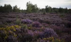 Thursley Common, managed by Natural England