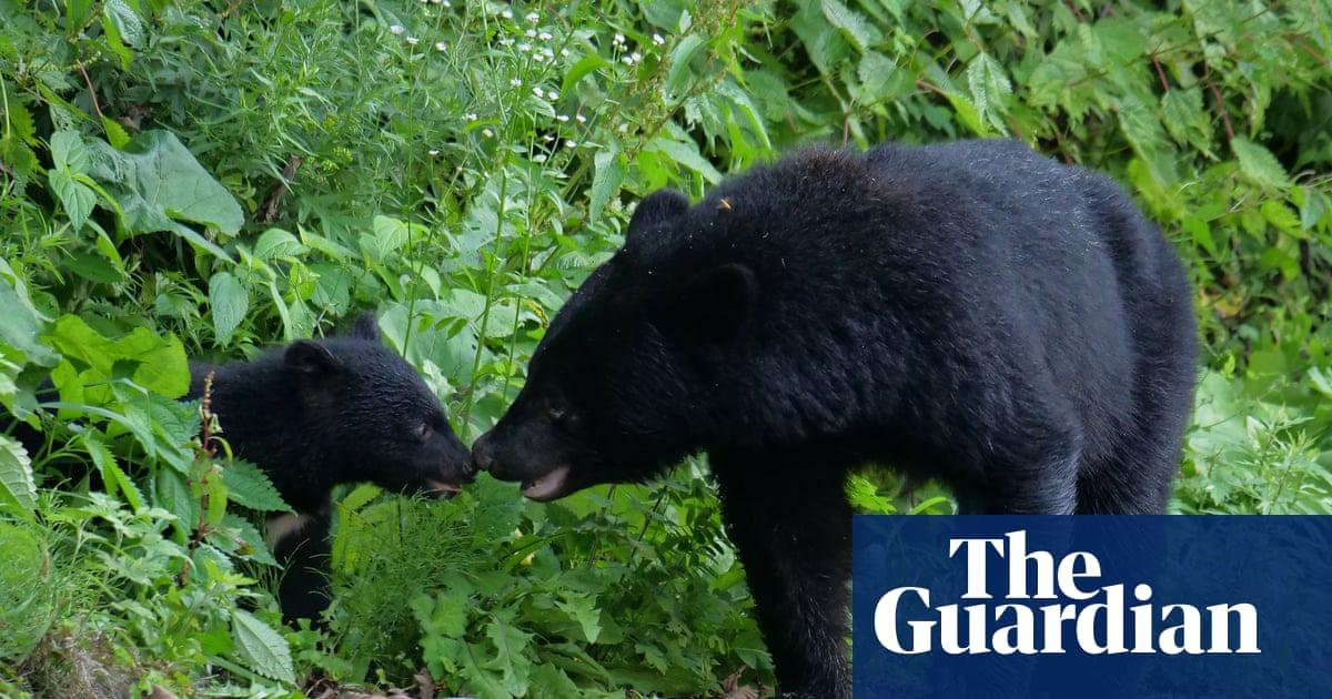 'Roar, roar, roar!' Japan rolls out rock music against bear attacks