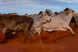 A mob of cattle are mustered in the Simpson desert in an image from The Grower, a year-long road trip by Alice Mabin photographing Australia's primary producers