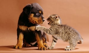 a cute dog and dog