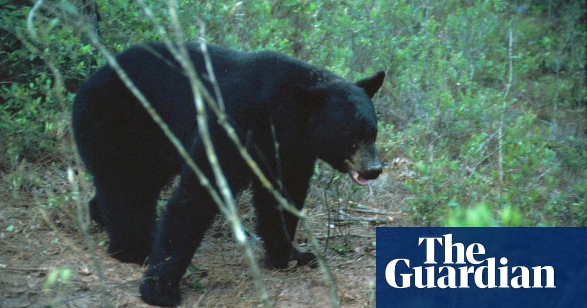 Excited, pursuing bear: Florida officials seek unusual urban visitor