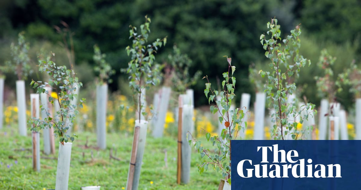 Reforestation hopes threaten global food security, Oxfam warns