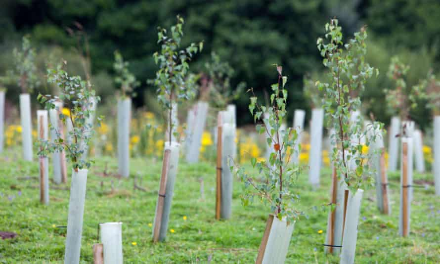 Campaigners criticise carbon credits based on tree planting, because trees take decades to grow, while emissions cause global heating straight away.