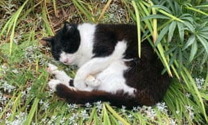 Let sleeping cats lie ... Bozo in the garden.