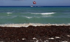 Mexico has spent $17m million in an attempt to clear 500,000 tons of sargassum seaweed from its Caribbean beaches, but the problem only seems to be getting worse.