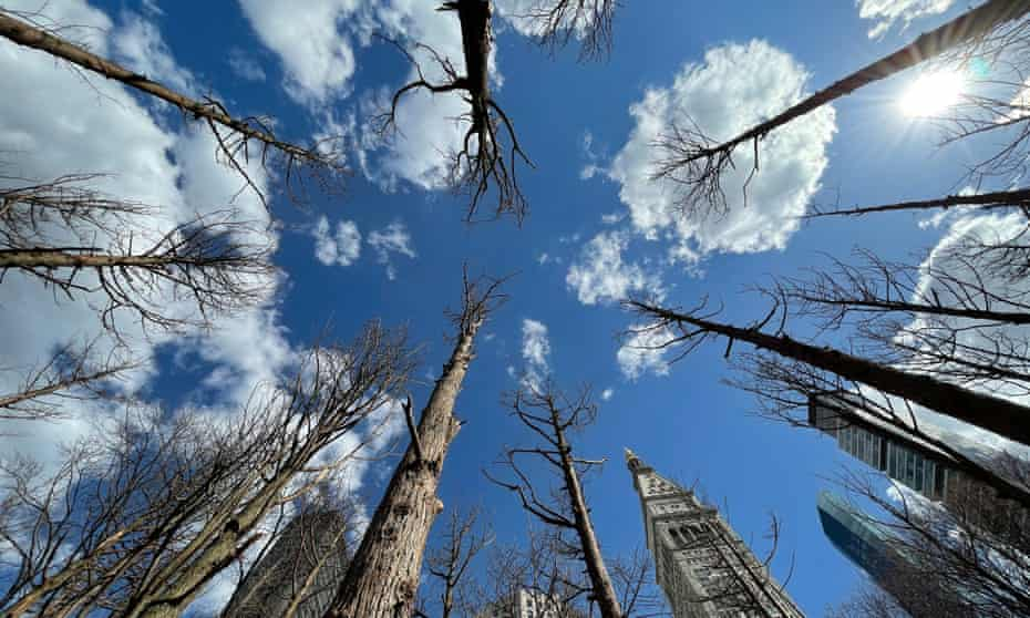 Maya Lin's Ghost Forest: 'I didn't just want to talk about 'hey, this is happening,' without offering solutions.'