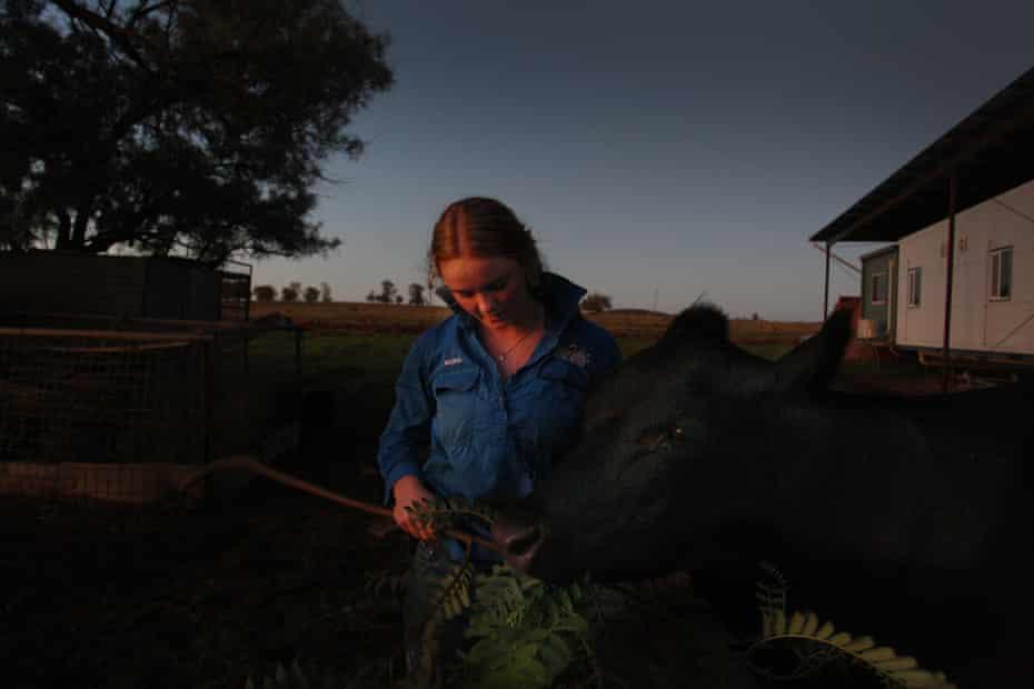 Matilda Penfold hand feeds a pet cow