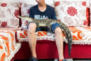 """Shao Jian Feng, 26, with a saltwater crocodile (Crocodylus porosus) in his home on the outskirts of Beijing. When fully grown this juvenile crocodile can reach up to six metres, making it the largest reptile in the world. It's one of five crocodilians he owns, along with two large snakes. """"There are 23 crocodilian species in the world. We hope to collect all of them,"""" he says. Saltwater crocodiles can retail for up to 9,000RMB ($1,500). In the wild, they are found mainly in south-east Asia and northern Australia."""