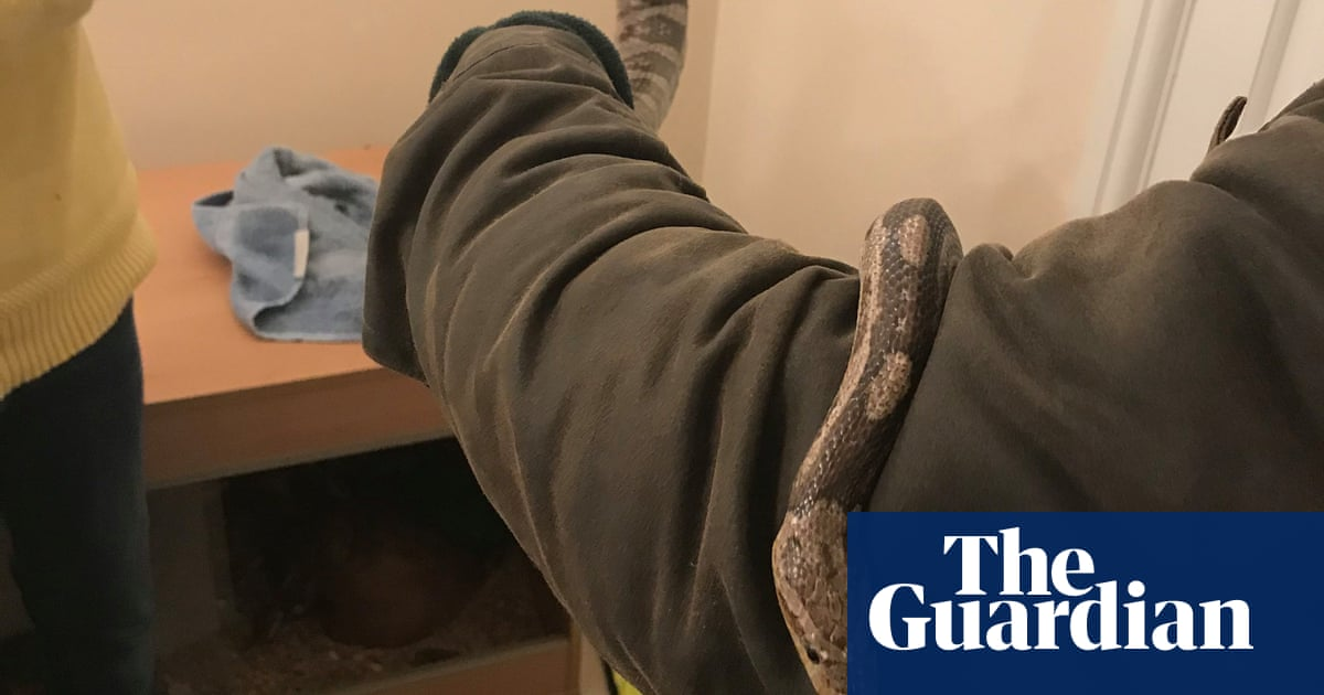 Pet snake cut free after getting trapped under car's gearstick