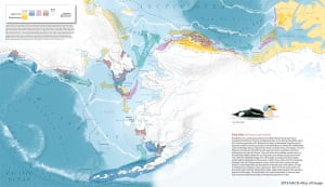King Eider by Daniel P. Huffman visualizes the arctic life of King Eiders, one of 135 pieces that he produced for the Ecological Atlas of the Bering, Chukchi, and Beaufort Seas