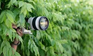 Camera in bushes