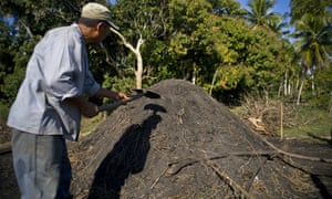 Artisanal charcoal: Cuba's first legal export to US in more