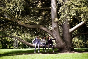 People take selfies on a tree in Royal Victoria Park, Bath