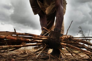 A Haitian sugar cane worker gathers cut cane in San Pedro, Dominican Republic