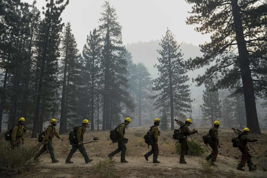 A fire crew near Lake Tahoe. Firefighters are often the first to find and rescue injured animals.