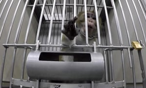 Monkeys are not supposed to be kept alone in cages