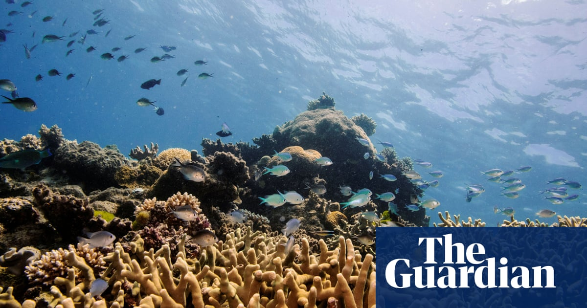 Fish that eat microplastics take more risks and die younger, study shows