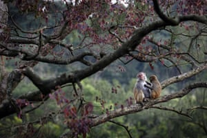 A pair of monkeys in Kam Shan Country Park in Hong Kong