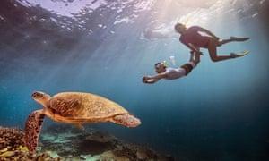 Tourists photograph a sea turtle