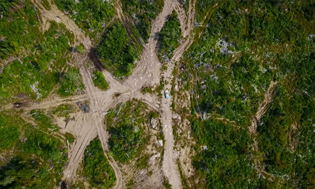 Aerial photography shows scarring left by logging operations in Ontario forests.