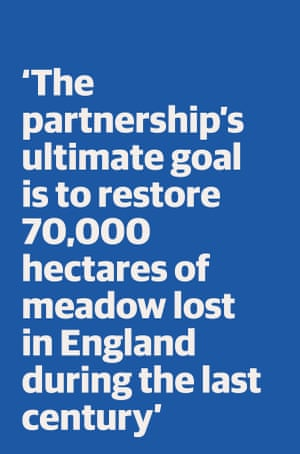 Quote: 'The partnership's ultimate goal is to restore 70,000 hectares of meadow lost in England during the last century'