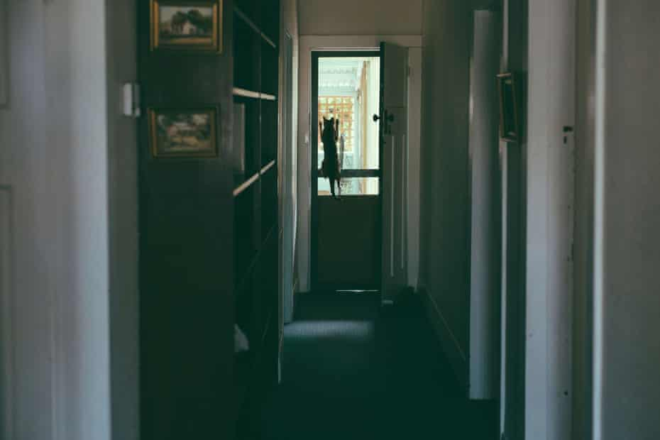 A dim hallway with a cat climbing up a flyscreen door at the end of it