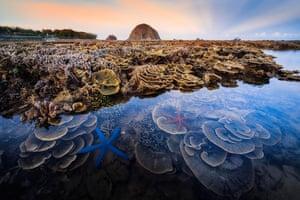 Runner-up, Hon Yen marine ecosystem